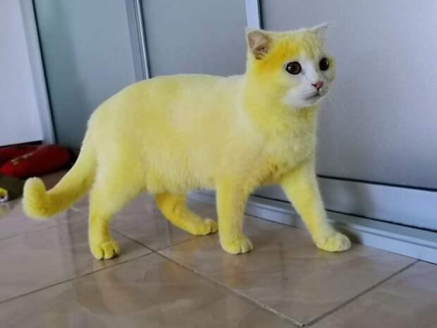 Как обычный кот стал жёлтым, или К каким курьезам может привести лечение народными средствами