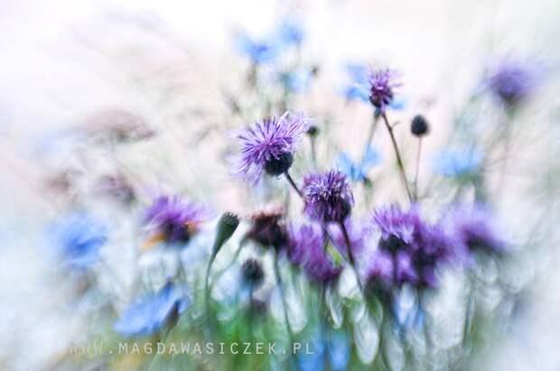 ФОТОВЫСТАВКА. Magda Wasiczek: великолепные цветы