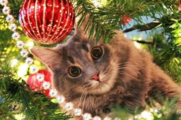 1. Следит за порядком елка, кошка, подборка