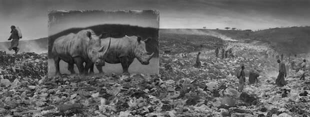 Портреты диких животных, установленные в разрушенных местах Африки, которые они когда-то населяли