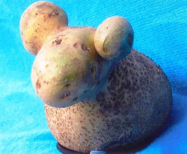 10. Картошка-барашка овощи, фрукиы