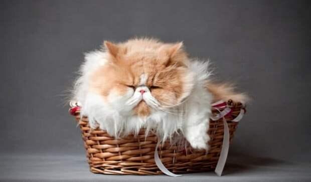 кот уснул