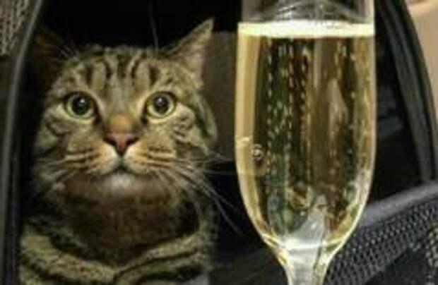 Знаменитый толстый кот Виктор похудел