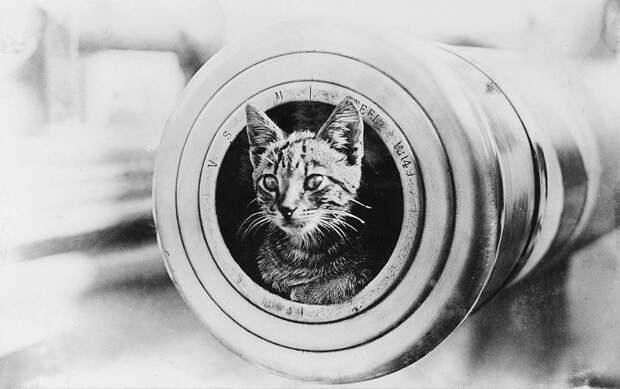 Кошки на кораблях