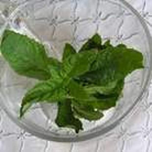 В каждый стакан положить по веточке мяты, влить горячий чай и подавать. По желанию еще можно подать кусковой сахар и ломтик лимона.