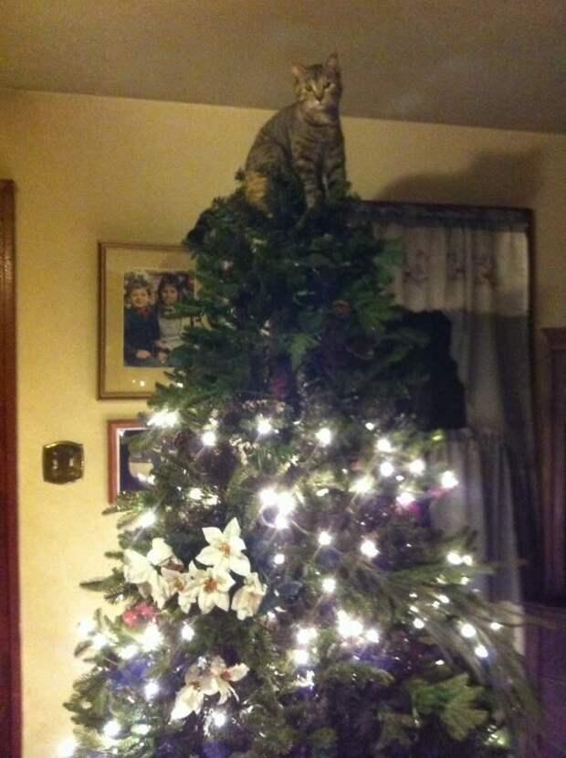 21. Звезда! животные, новый год, праздник к нам приходит, разрушительная сила, рождество, собаки и кошки, юмор