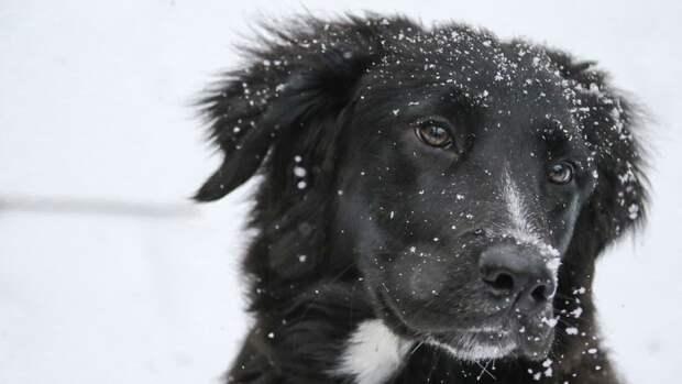 Женщины спасли собаку, провалившуюся в заброшенный колодец под Иваново
