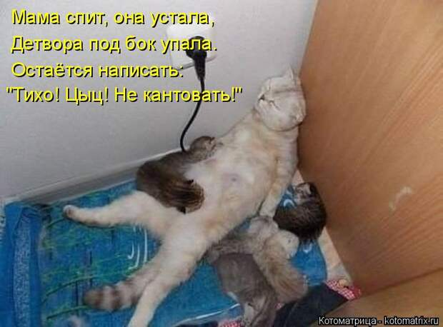 """Котоматрица: Мама спит, она устала, Детвора под бок упала. Остаётся написать: """"Тихо! Цыц! Не кантовать!"""""""