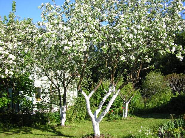 Что саду надо? Как определить состояние деревьев