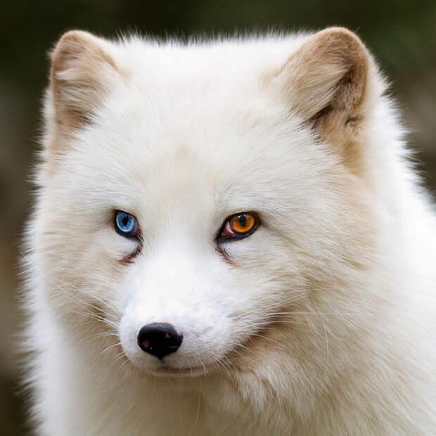different-eye-color-heterochromia-2__700