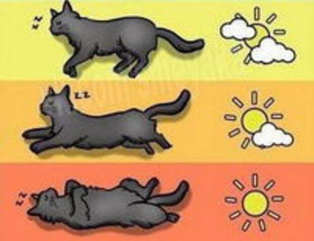 Определяем погоду по коту