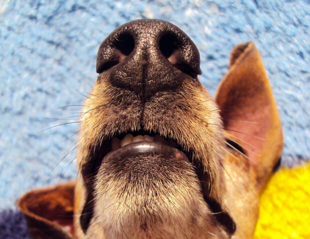 Международный креатив и собачьи носы в письме команды Pics.ru