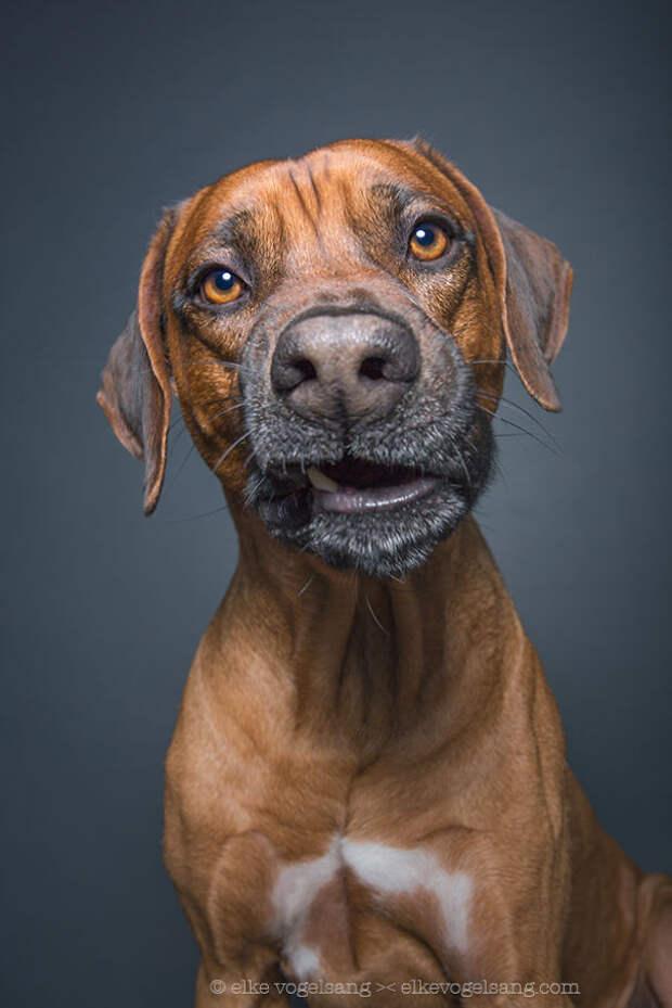 Портреты собак, смотрящих на фотографа со скепсисом