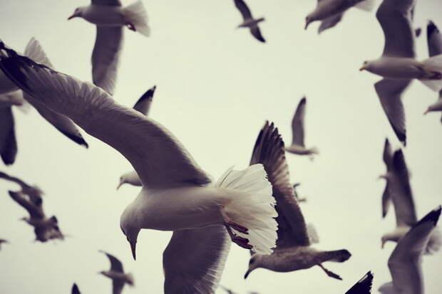 Самые яркие работы фэшн-фотографа Олли Берна