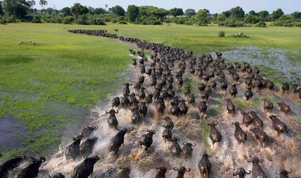 Завораживающие фотографии миграции животных и насекомых