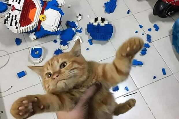 Кот за секунды испортил изделие, которое хозяин собирал неделю, но тот не смог его наказать
