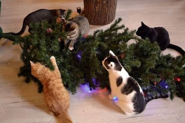 24. Праздник к ним приходит! животные, новый год, праздник к нам приходит, разрушительная сила, рождество, собаки и кошки, юмор