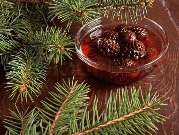 Сосна: целебные дары и «Шишкин Мёд»