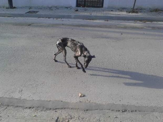 Этот пес медленно умирал на улице... Но через несколько недель его уже не узнать!