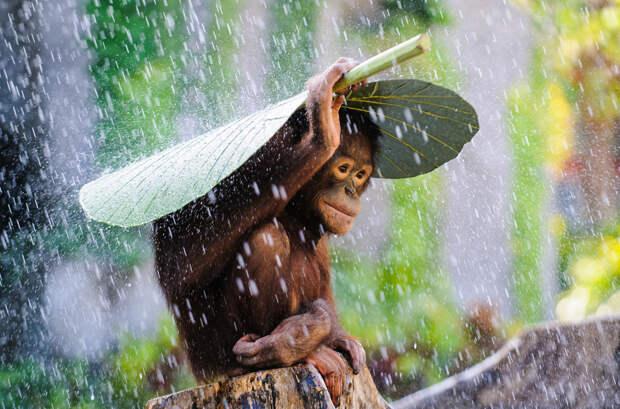Победители конкурса от National Geographic в 2015 году