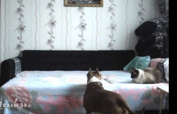 Что делает собака, когда остается дома одна
