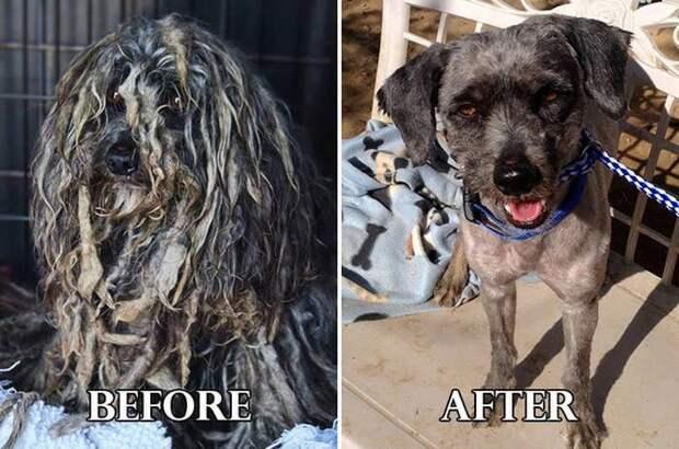 собаки до и после спасения, собаки до и после ухода, собаки до и после стрижки