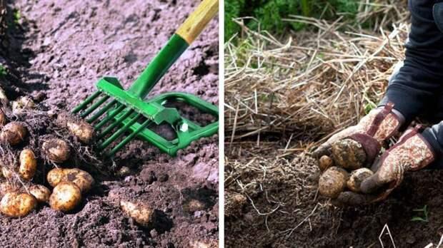 Приспособления для огорода, которые помогают облегчить работу