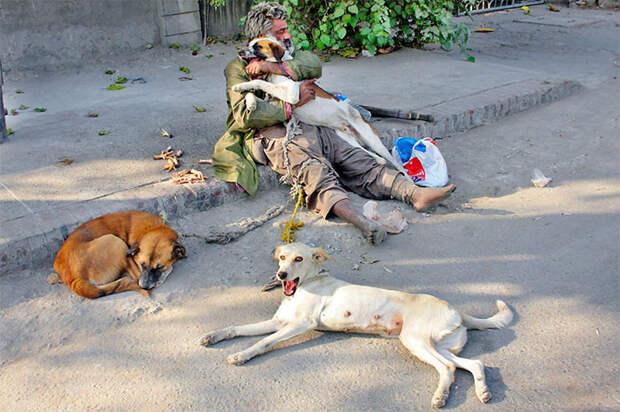 41. Бездомный с питомцами на улице Лахора  бездомный, любовь, собака