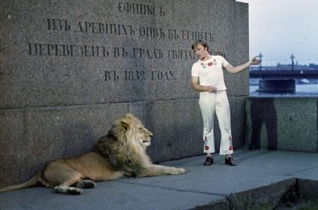 Лев Кинг - трагедия семьи Берберовых животные, кино, это интересно