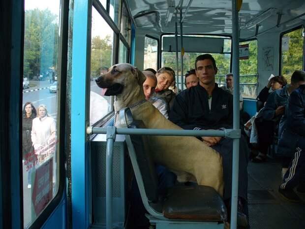 http://svit24.net/images/stories/articles/2012/Curiosities/10-2012/07/8(1).jpeg