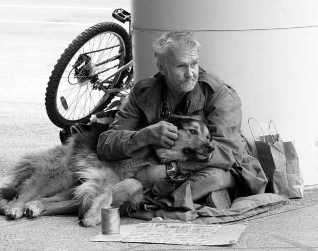 Собакам плевать на деньги, им нужна только любовь