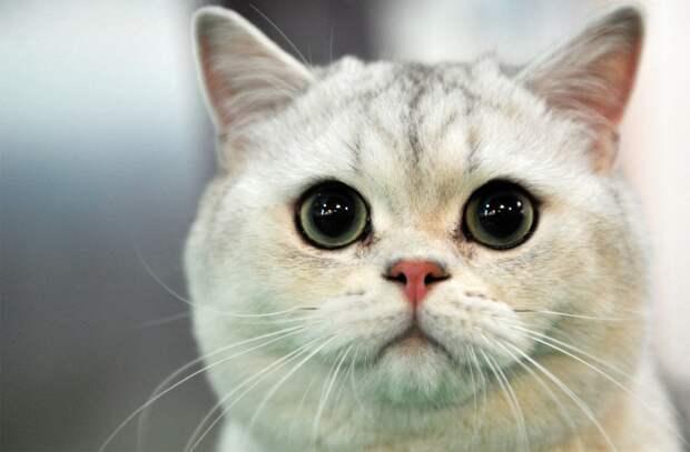 Власти Австралии намерены убить 2 миллиона котов