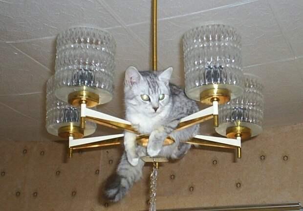 Чем могут удивить коты, смешные переписки