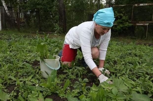 Российских дачников оштрафуют за сорняки на участке