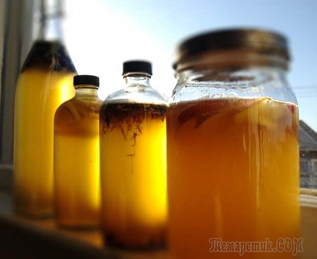 Топ-10 полезных свойств чайного гриба