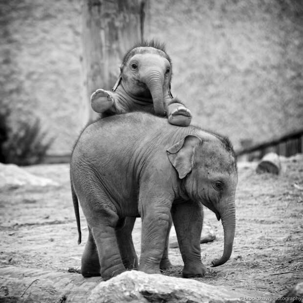 37 фотографий животных, которые вызывают улыбку - 15
