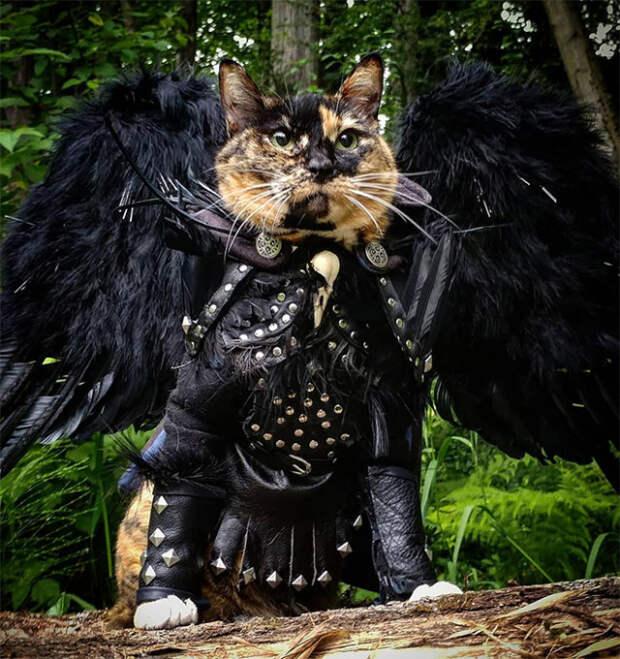 Кошки в боевой броне