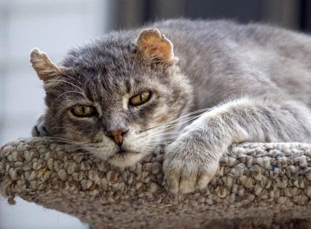История одной томской кошки, или «В России надо жить долго»
