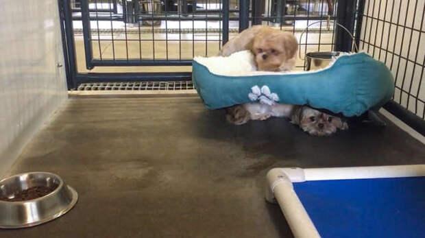 Две крошечные собачки так сильно боялись людей, что прятались от них под кроватку