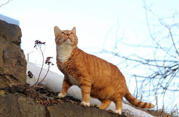 Кот получил должность старшего мяучного сотрудника