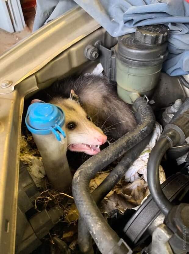 Забавные случайные фотографии диких животных