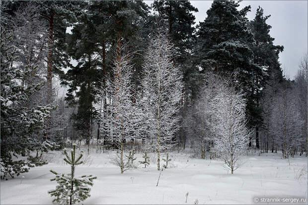 Зимняя природа. Фотографии для души