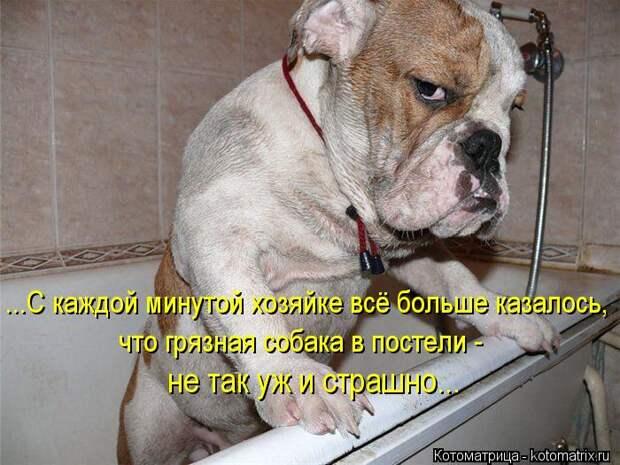 Котоматрица: ...С каждой минутой хозяйке всё больше казалось,  что грязная собака в постели -  не так уж и страшно...