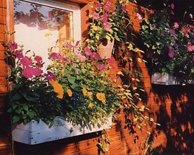 Контейнеры для цветов. Цветы в контейнерах.