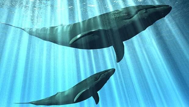 Альтернатива человеку: на Земле возможна морская цивилизация