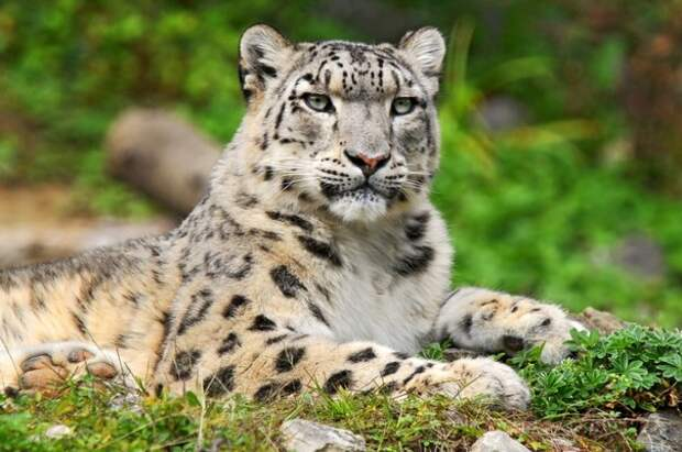 Красота дикой природы