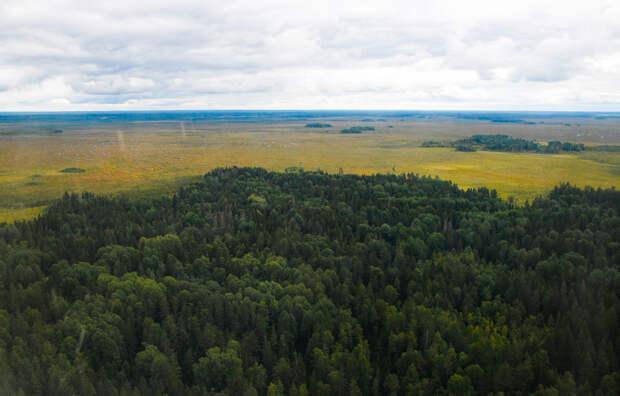 За прошедшие три года лесной фонд Тверской области увеличился почти на 30 тысяч гектаров