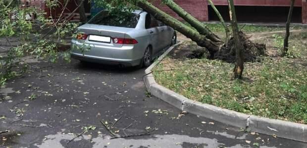 В Анадырском проезде на припаркованную машину упало дерево