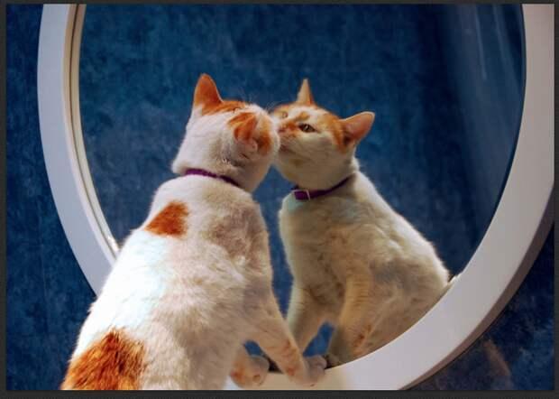 Узнают ли животные себя в зеркале?