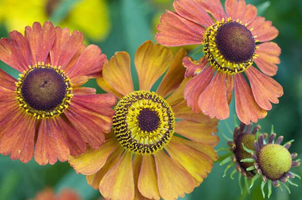 Обзор новинок декоративных растений этого сезона